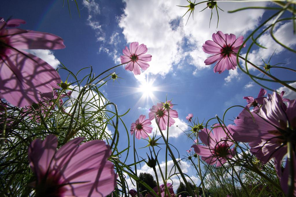 Flowers Sky