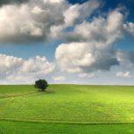 Tree Grass Clouds
