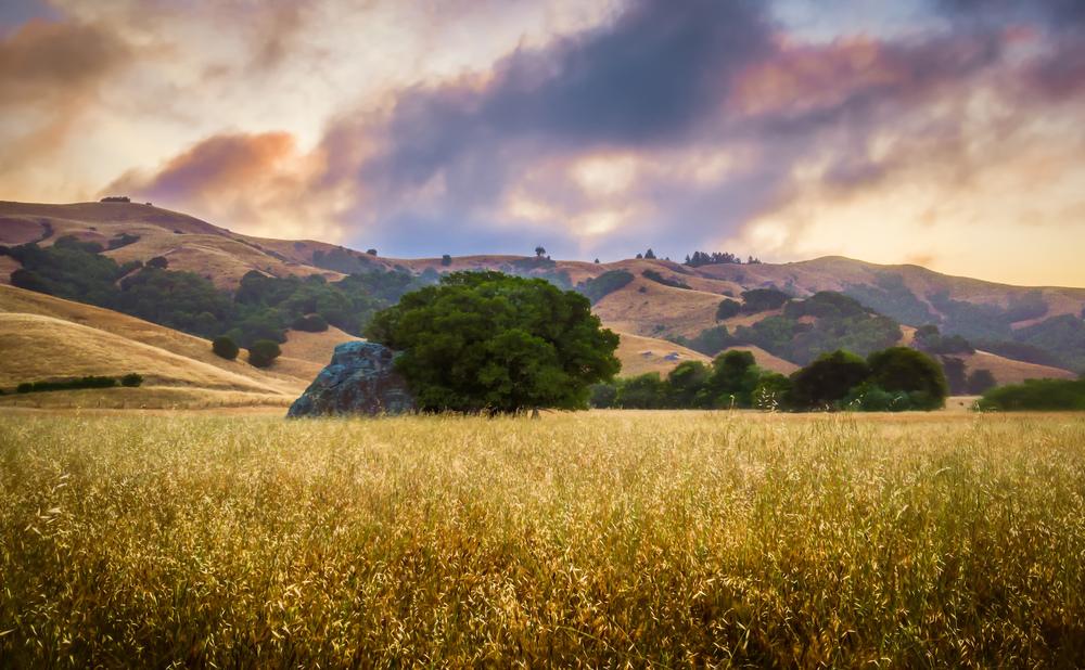 Spirit Rock at Sunrise Nicasio California