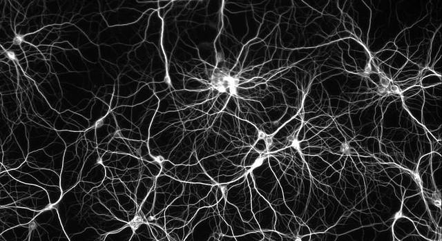 NeuronsCROP